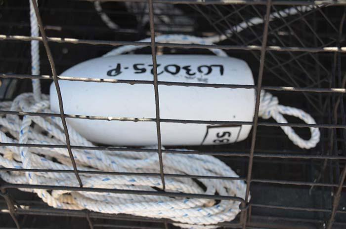 Lobster trap buoy with floating ID marker