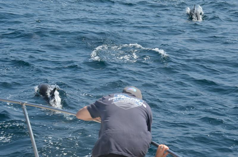 Ocean Conservationists accompanied by dolphins