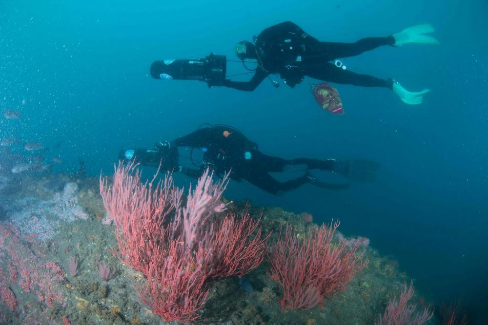 ODA Divers on scooters looking for marine debris