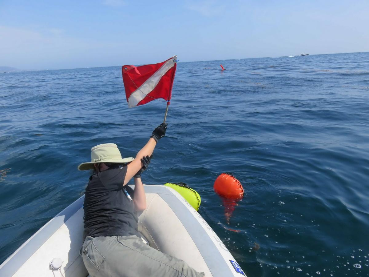 Red dive flag