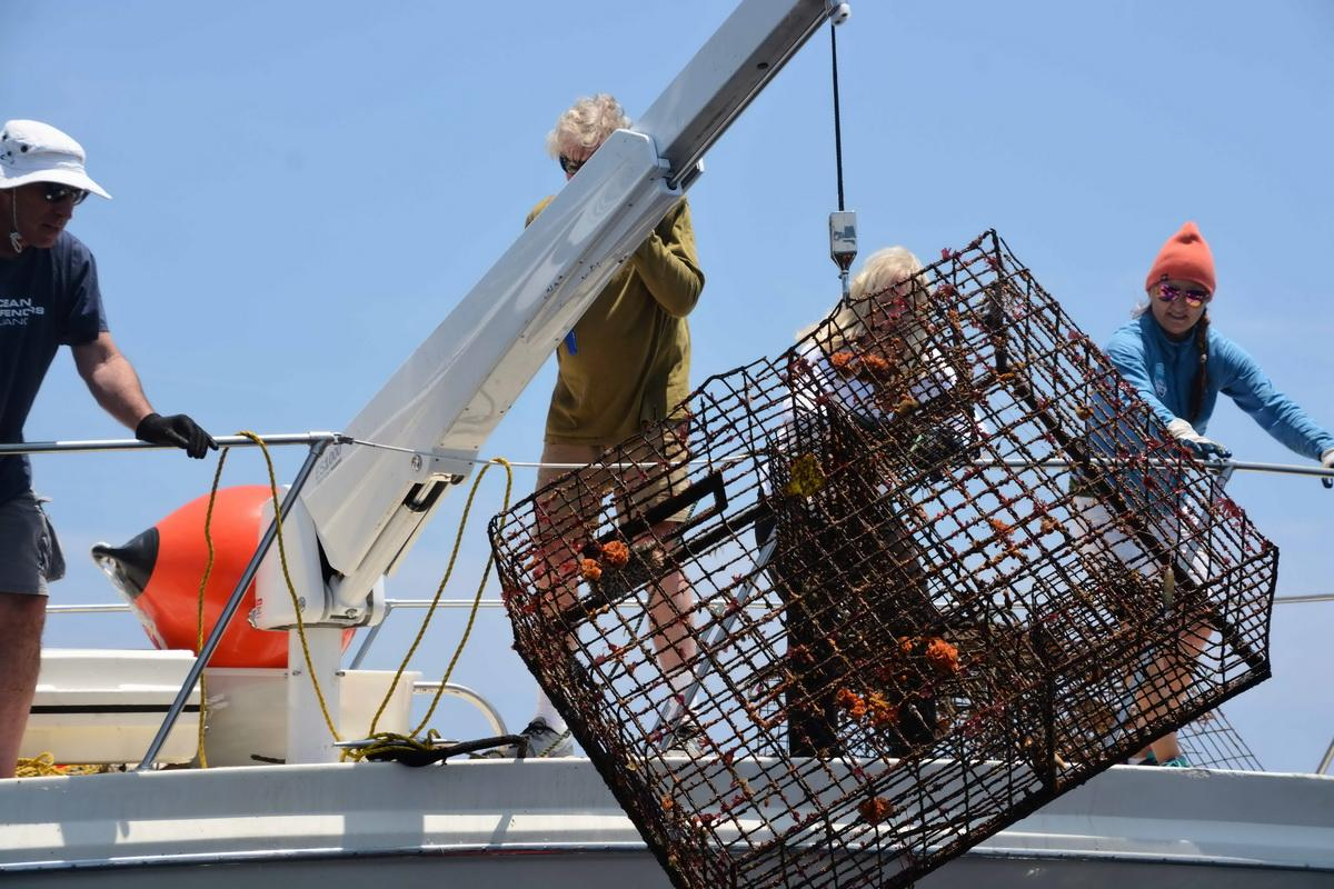 Lobster trap being removed